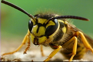 yellowjackets 1
