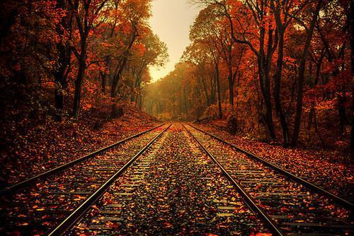 fall-train-tracks-1